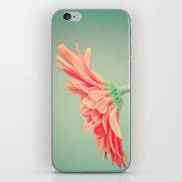 Darling Gerber Daisy  iPhone & iPod Skin