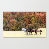 Horses Valley Canvas Print