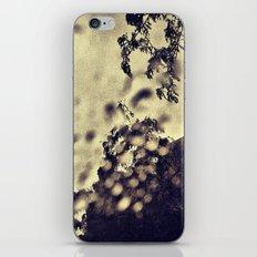 'RAIN WINDOW' iPhone & iPod Skin