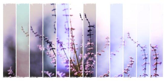FLOWER - TWELVE Canvas Print