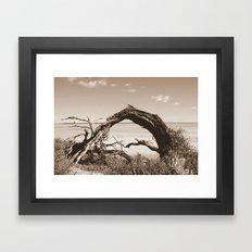 Deadwood Framed Art Print