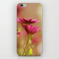 Pink Blush iPhone & iPod Skin
