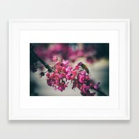 a redbud bee Framed Art Print