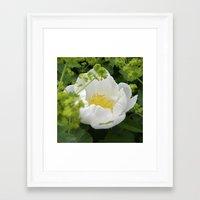 Peony Bloom Macro XXVI Framed Art Print