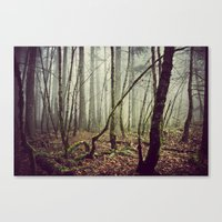 Out In The Woods Today Canvas Print