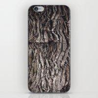 Oak tree trunk iPhone & iPod Skin