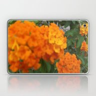 Flower,rose,daisy,lily,f… Laptop & iPad Skin