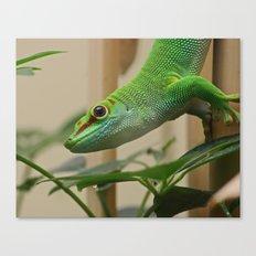 Madagascar Giant Day Gecko Canvas Print