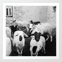 Sheep In Morrocan Desert… Art Print