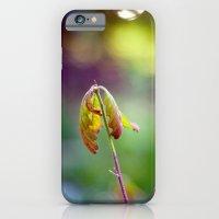 Baby Oak iPhone 6 Slim Case