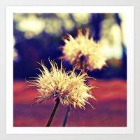Summer Dandelions Art Print