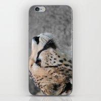 Cheetah 1 iPhone & iPod Skin