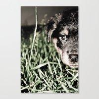 ROTTIE LOVE Canvas Print