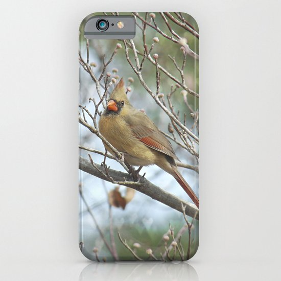 Lady Cardinal iPhone & iPod Case