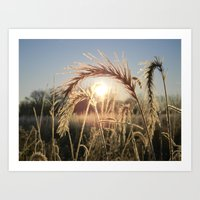 Wheat Sunrise Art Print