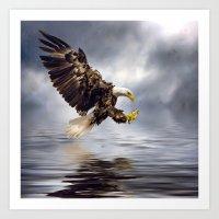 Young Bald Eagle Swooping Art Print