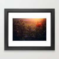 Summer Poppy Framed Art Print