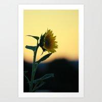 Sunset Sunflower Art Print