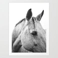 Silver Horse II Art Print