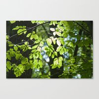 Light in the leaves Canvas Print