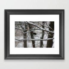 Junco Framed Art Print