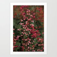 Little Red Flowers Art Print