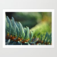 Spruce in the Morning Art Print