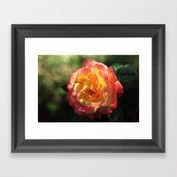 Rose 2599 Framed Art Print