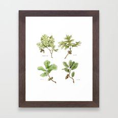 The Oaks Framed Art Print