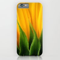 iPhone & iPod Case featuring Sunflower  by TDSWHITE