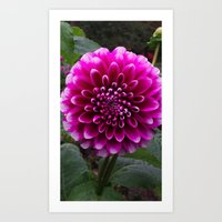 Flower In The Park Art Print