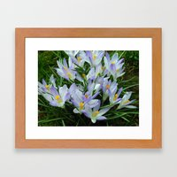 Lavender Crocus Framed Art Print