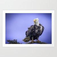 Eagle in Breeze Art Print