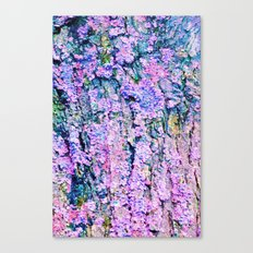 Lichens Canvas Print