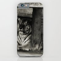 iPhone & iPod Case featuring Tiger by Christy Leigh