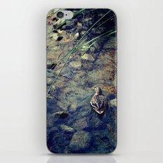 Quack, Quack iPhone & iPod Skin