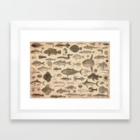 FISHES Framed Art Print