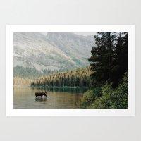 Bull Moose At Swiftcurre… Art Print