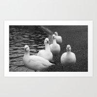 Quacks On The Quoile. Art Print