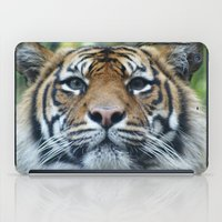 Tigers Glorious Stare iPad Case