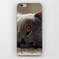 Dieslchen iPhone & iPod Skin