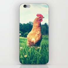 The Life of a Chicken iPhone & iPod Skin