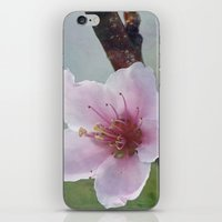 Peach Blossom iPhone & iPod Skin