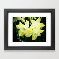 Daffodil family Framed Art Print
