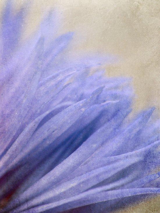 Cornflower Petals Canvas Print
