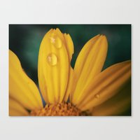 Yellow Water Canvas Print