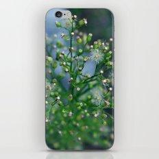 Mini Dandelions iPhone & iPod Skin