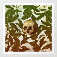 Novsade Art Print