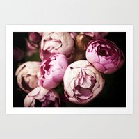 Pink Bourbon Roses Art Print
