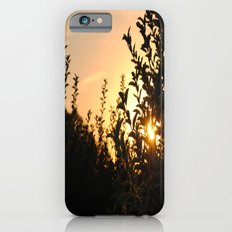 Apple Orchard at Sunset iPhone 6 Slim Case